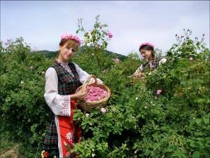 Bulgarian Rose water